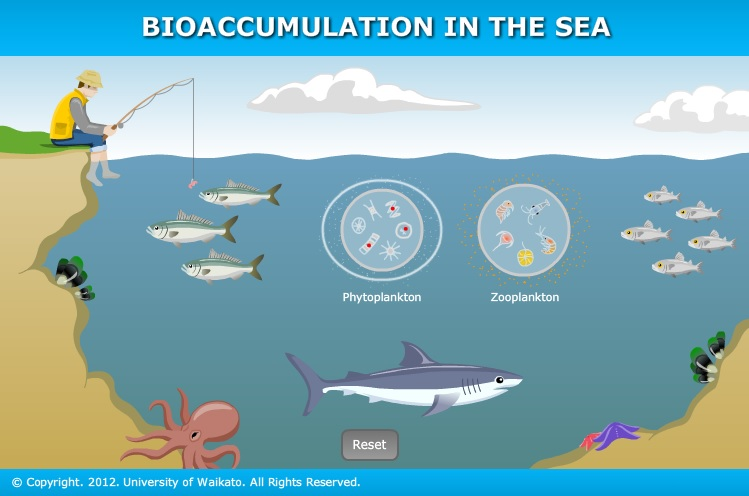Bioaccumulation in the sea — Science Learning Hub