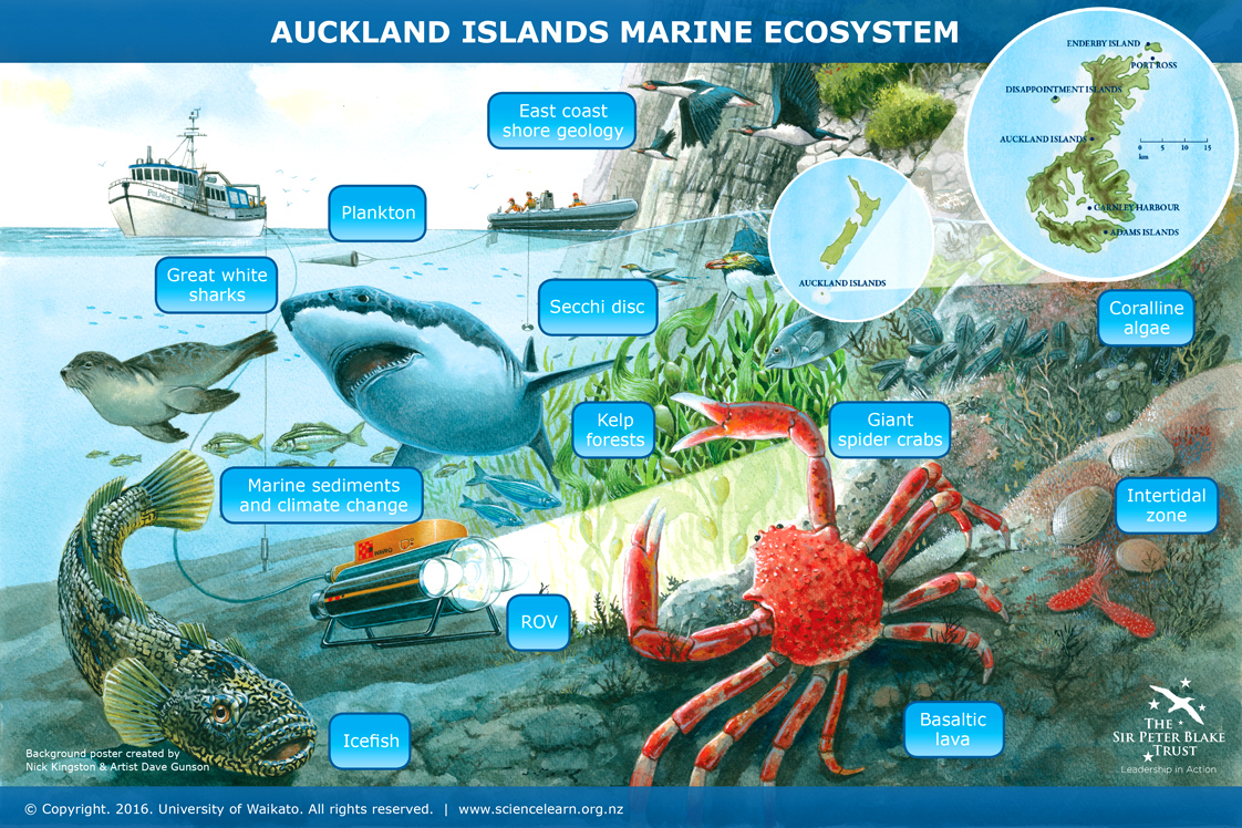 auckland islands marine ecosystem science learning hub