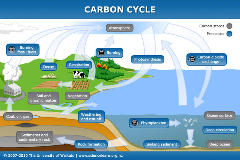 Carbon cycle Science Learning Hub – Carbon Cycle Diagram Worksheet