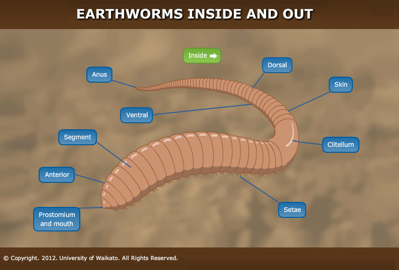 Outside Of An Earthworm Science Learning Hub