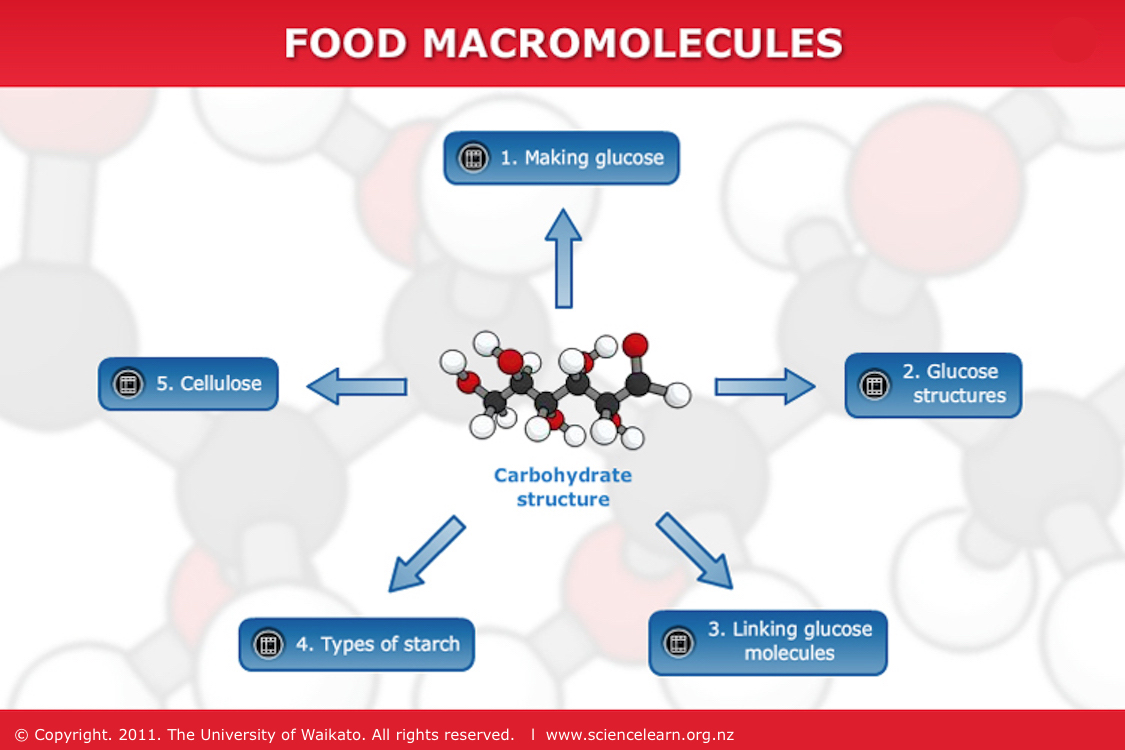 Food macromolecules