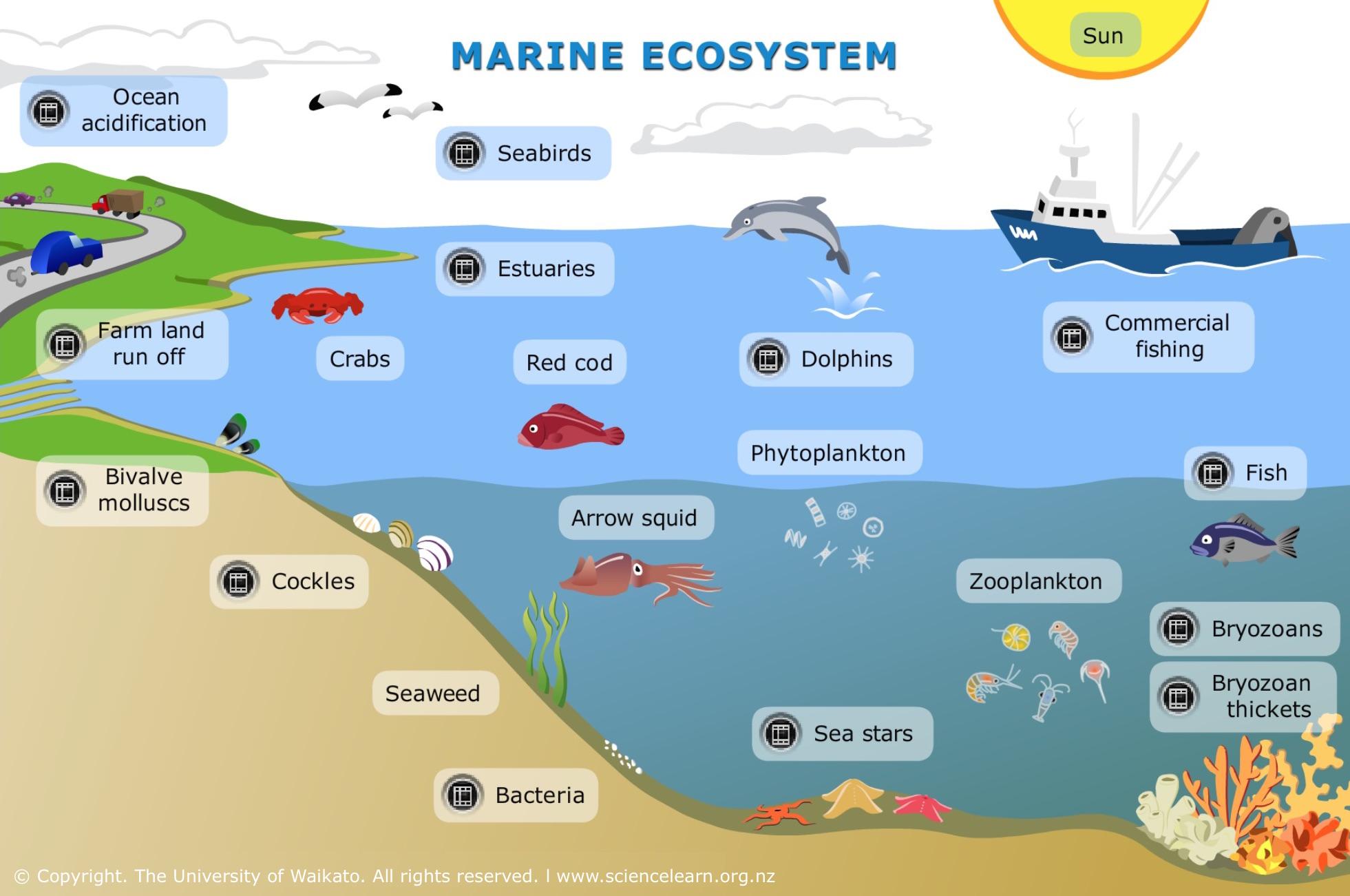 Marine Ecosystem  U2014 Science Learning Hub