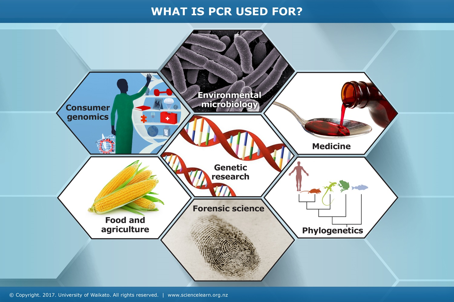 What is PCR used for? — Science Learning Hub