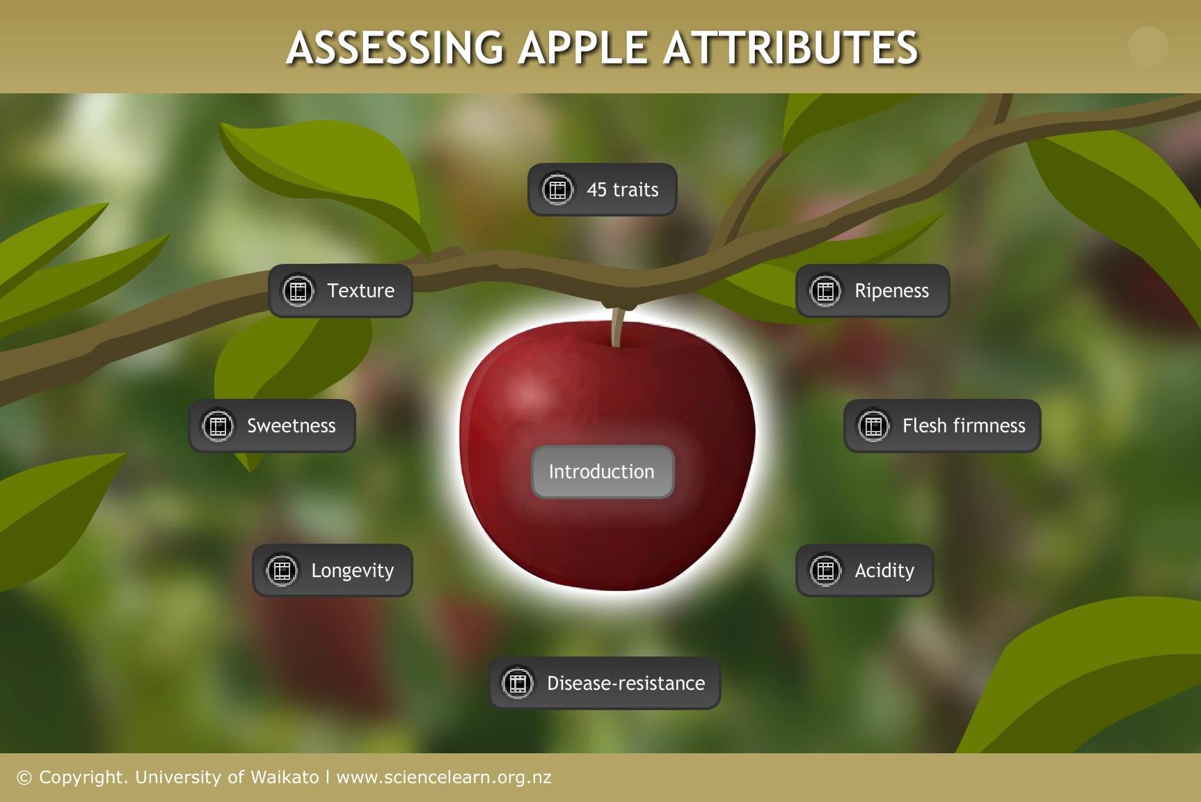 Breeding A New Apple Cultivar Science Learning Hub
