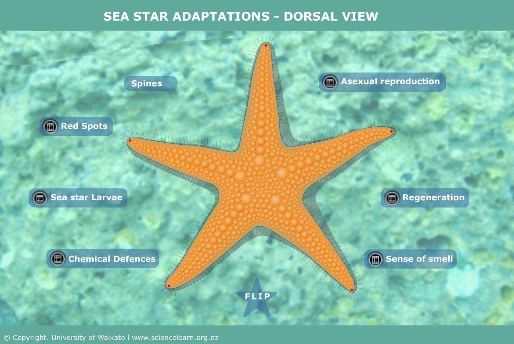 Sea stars — Science Learning Hub