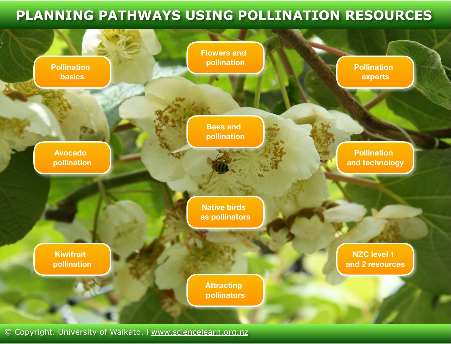 Planning pathways using pollination resources science learning hub this interactive diagram provides a selection of pathways that allow for differing approaches and starting points using our pollination resources pooptronica