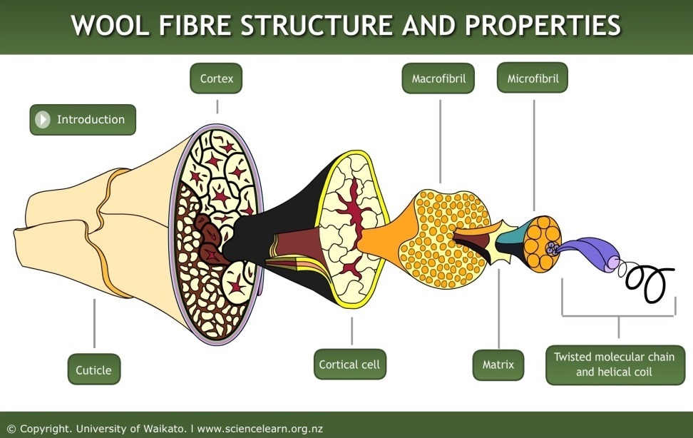 Wool Fibre Structure And Properties Science Learning Hub