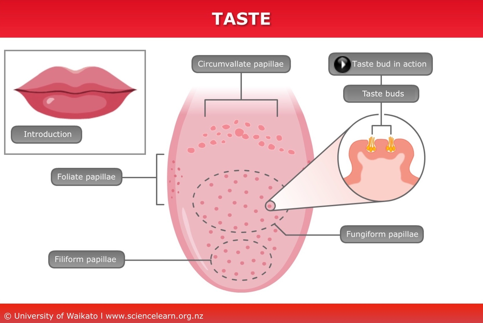 Human Taste Science Learning Hub