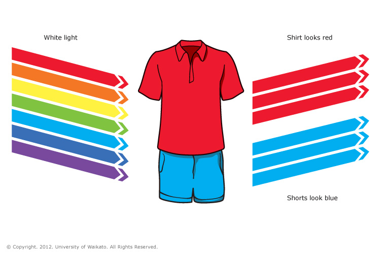 Red shirt and blue shorts — Science Learning Hub