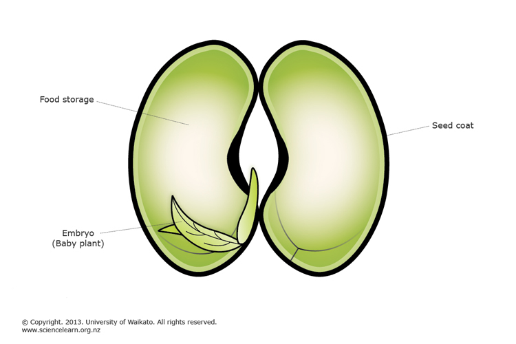 Plant Reproduction Science Learning Hub