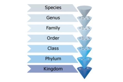 Classifying Marine Organisms Science Learning Hub