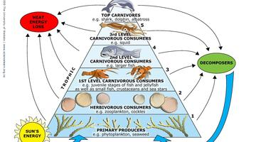 marine ecosystem \u2014 science learning hub Ocean Ecosystem Worksheet article