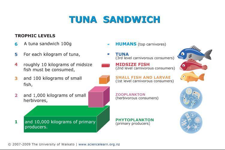 marine food web with decomposers wwwimgkidcom the