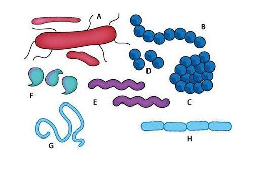 Microorganisms – friend or foe? — Science Learning Hub