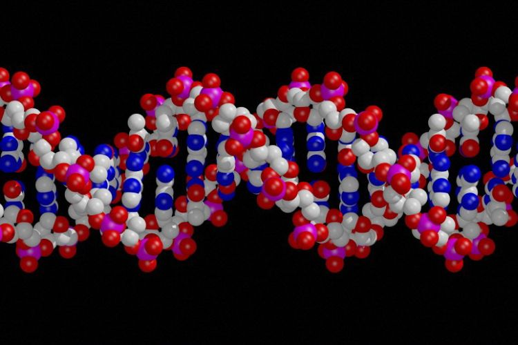 Dna Chromosomes And Gene Expression Science Learning Hub