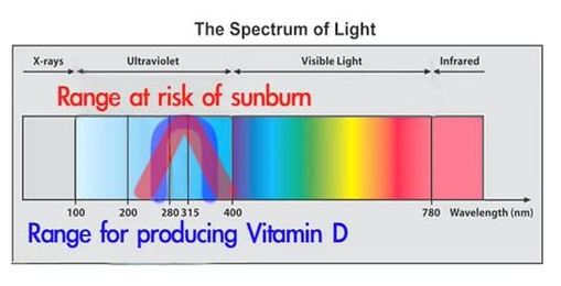 Measuring vitamin D levels — Science Learning Hub