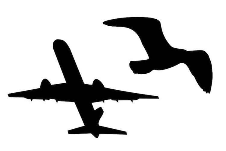 Principles of flight — Science Learning Hub