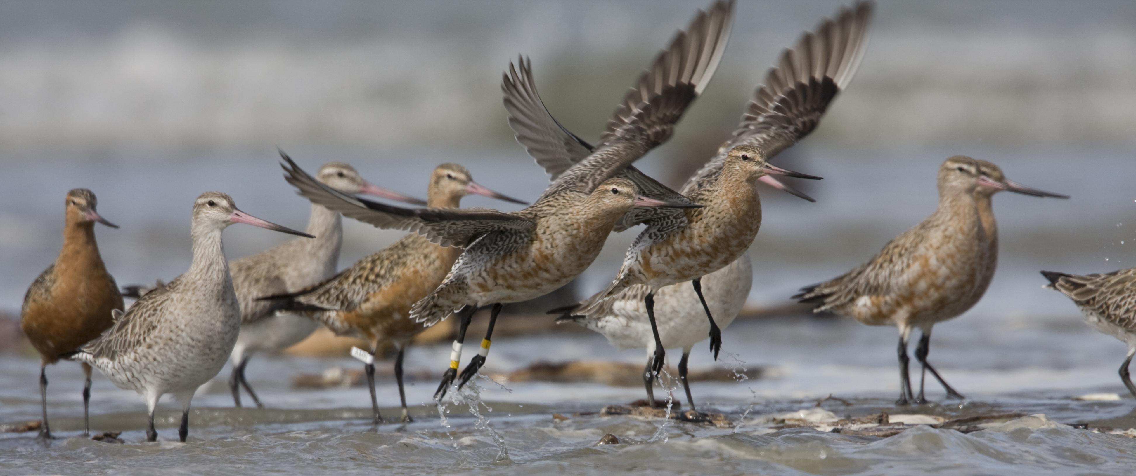 how birds fly u2014 science learning hub