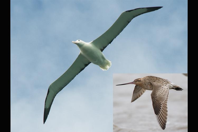 How birds fly — Science Learning Hub
