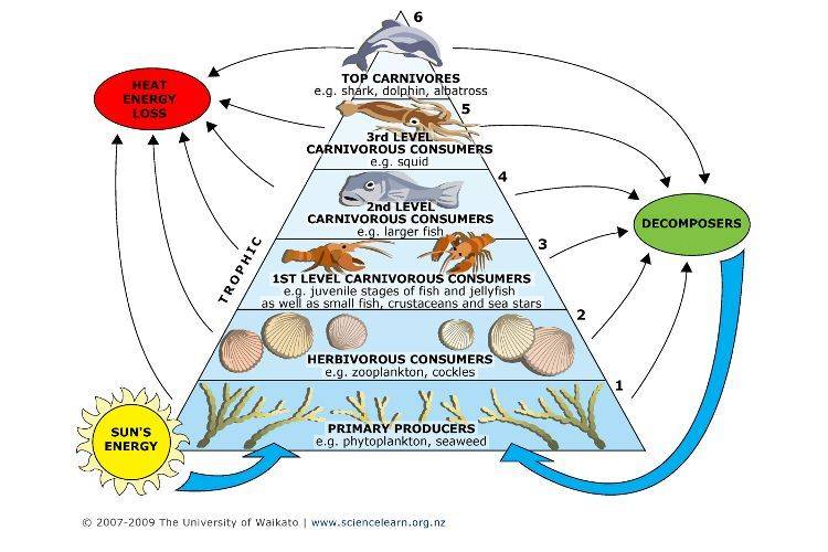 Toxins And Food Webs Science Learning Hub