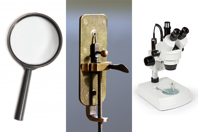 How Microscopes Magnify Science Learning Hub