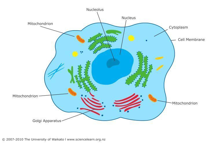 Antioxidants Science Learning Hub