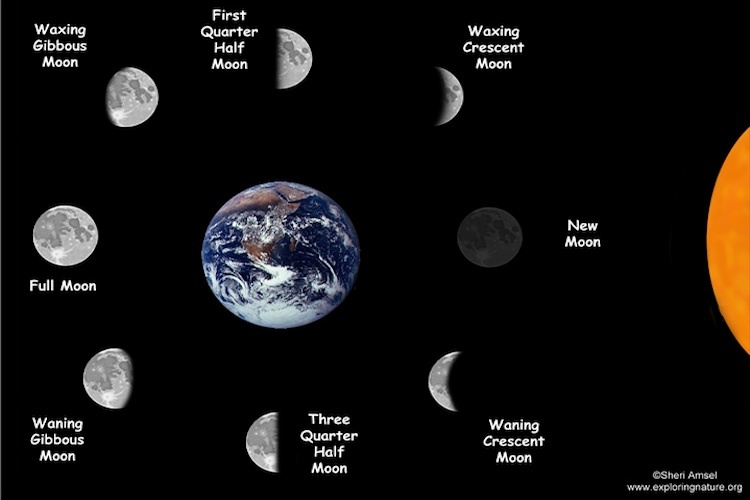Moon Phases Science Learning Hub