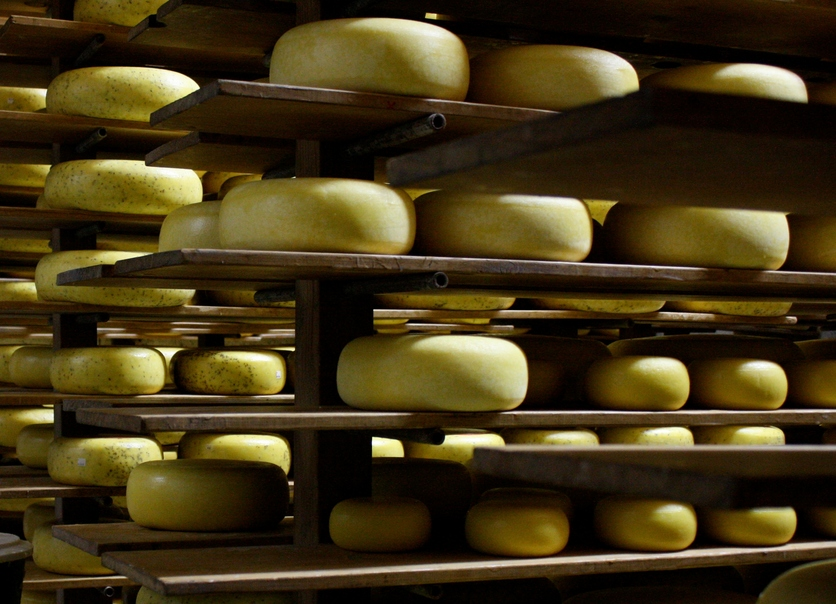 The science of cheese — Science Learning Hub