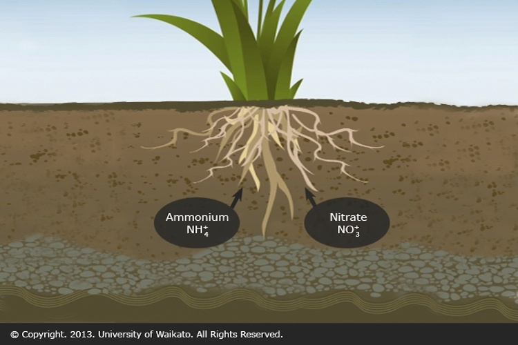 Plant uptake of nitrogen compounds science learning hub for Full form of soil