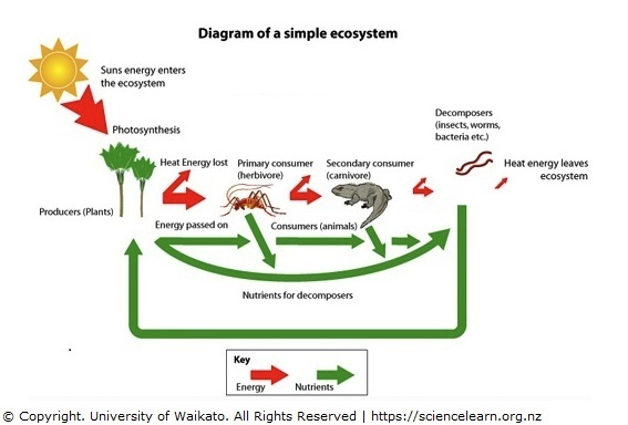 simple ecosystem diagram \u2014 science learning hub Food Web including Decomposers