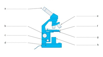 Label The Microscope Science Learning Hub