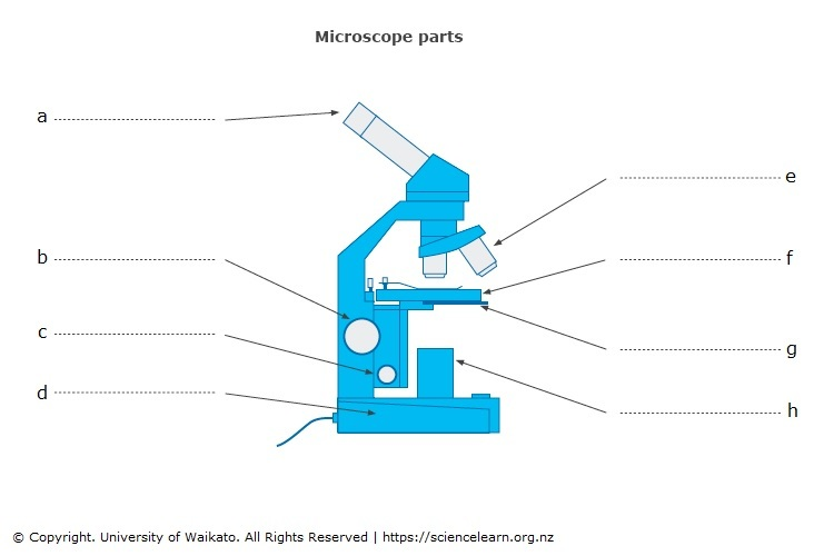 Microscope parts Science Learning Hub – Microscope Parts and Functions Worksheet
