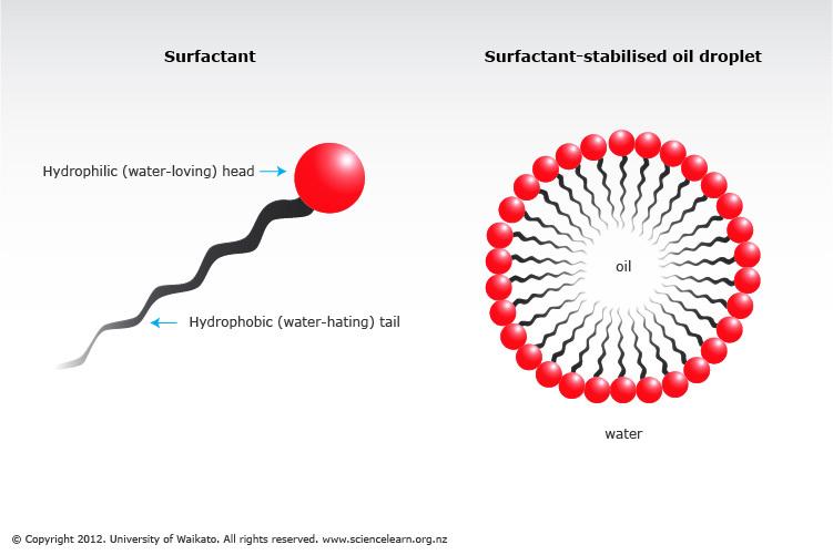 Image result for surfactant molecule