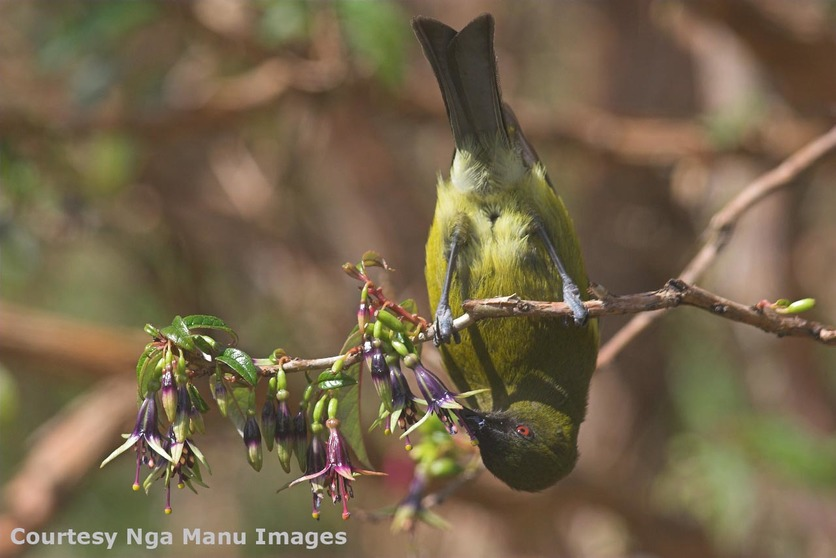 Birds' roles in ecosystems — Science Learning Hub
