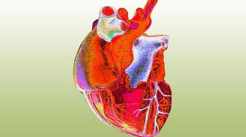 Label the heart — Science Learning Hub