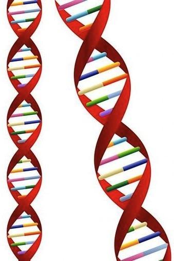 https://www.sciencelearn.org.nz/system/images/images/000/001/634/full/DNA-molecule20160805-15208-gyrrf7.jpg?1470372159