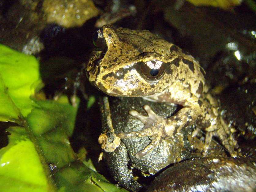 Native Frogs Science Learning Hub