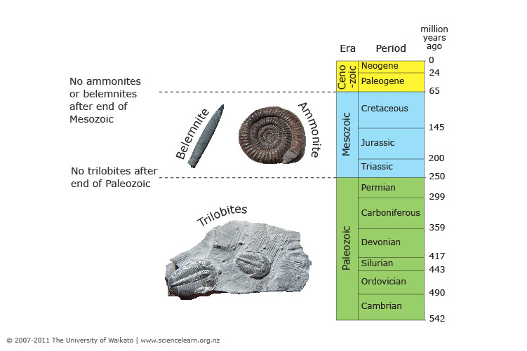 exempel på relativ fossil datering