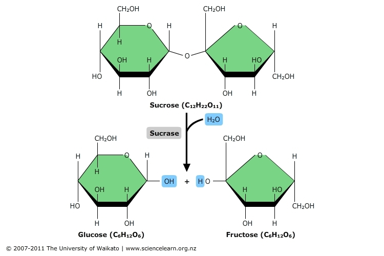 Hydrolysis Reaction Science Learning Hub