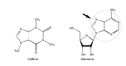 Caffeine and adenosine structure — Science Learning Hub
