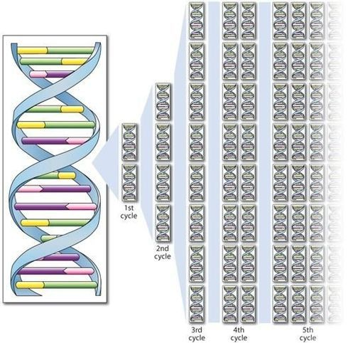 Dna Cloning Science Learning Hub