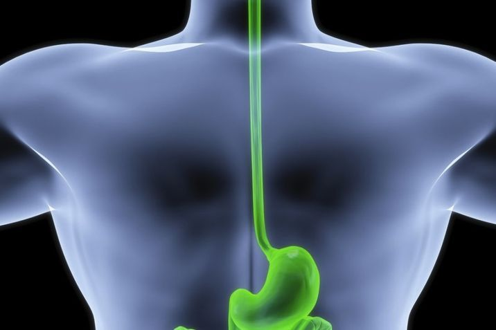 a research on the esophagus