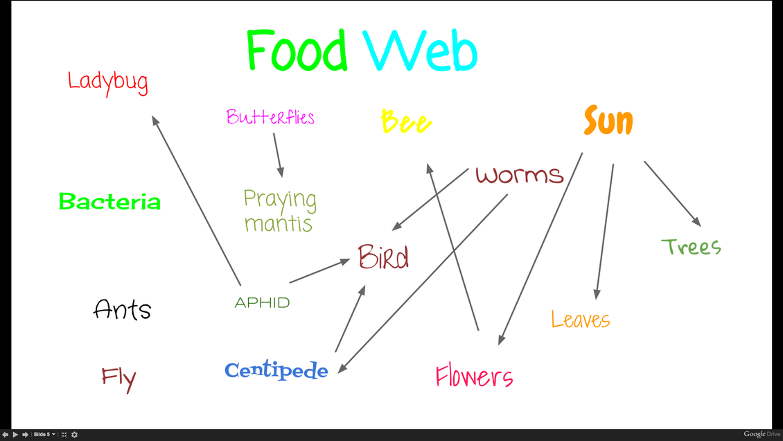 Food Web Site The S